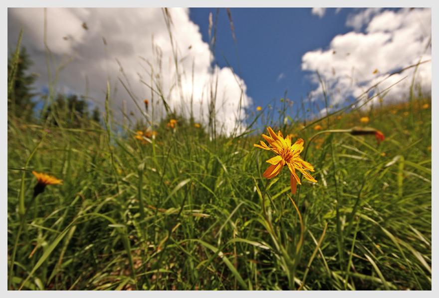 ...um sich in die herrlichen Blumenwiesen zu legen!