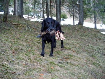 Hund freut sich über den wertvollen Fund
