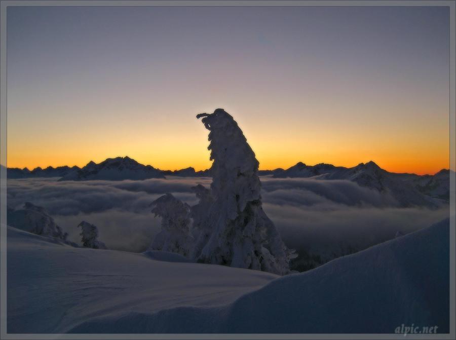 Blick über das Wolkenmeer auf die Allgäuer Alpen (Leilachspitze, Rauhhorngruppe)