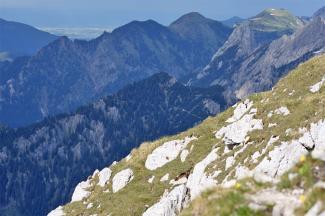 Ahornspitze, Firstberg und Geiselstein