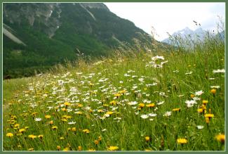 Blumenwiese bei Weissenbach