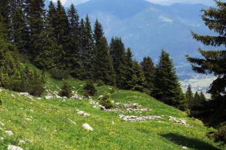 weißenbach sennalpe  höfener kreuz