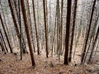 Bäume,Bäume,Bäume...