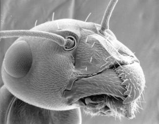 Eine kleine liebe Ameise