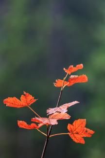 Herbst, 21.09.2013 I