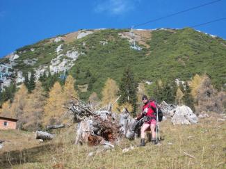 Riesen- Baumstumpf
