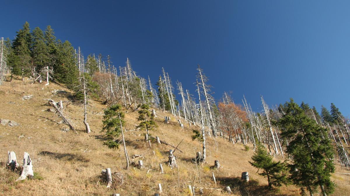 das Waldsterben am Westhang des Jochschrofens