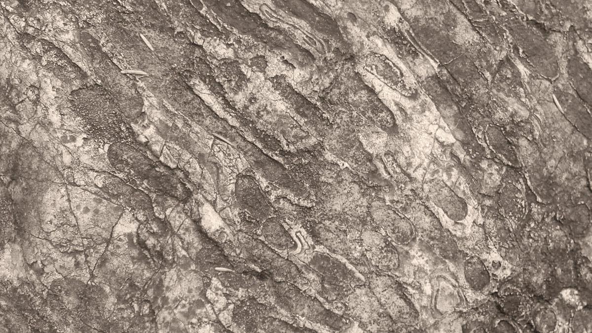 eine fossile Koralle im Bereich der Stuibenfälle bei Reutte