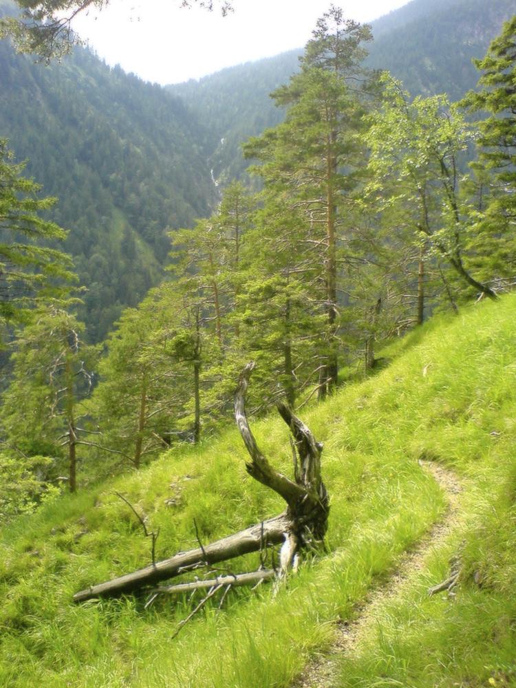 der kleine Steig durch die Steilflanke des Teufelstals zeigt sich durchgehend von seiner urigen Seite