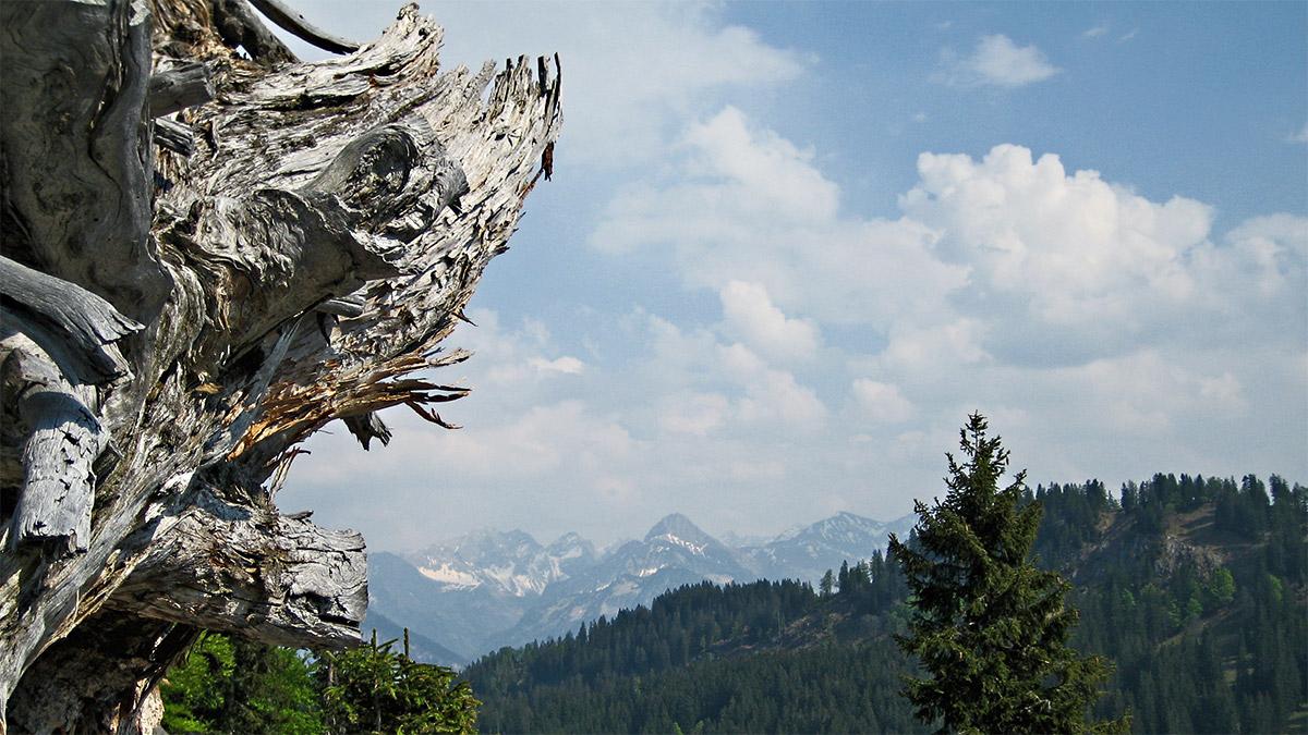 Ausblick vom Besler gegen Südosten hin zu der über dem Illertal in der Ferne sichtbaren Höfats (Bildmitte)