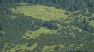 Hüttengrundmauern im Weißenbacher Notländ