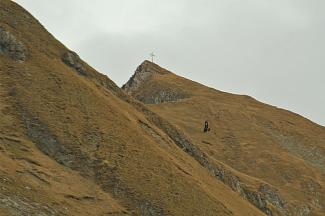 Adler an der Rotschrofenspitze
