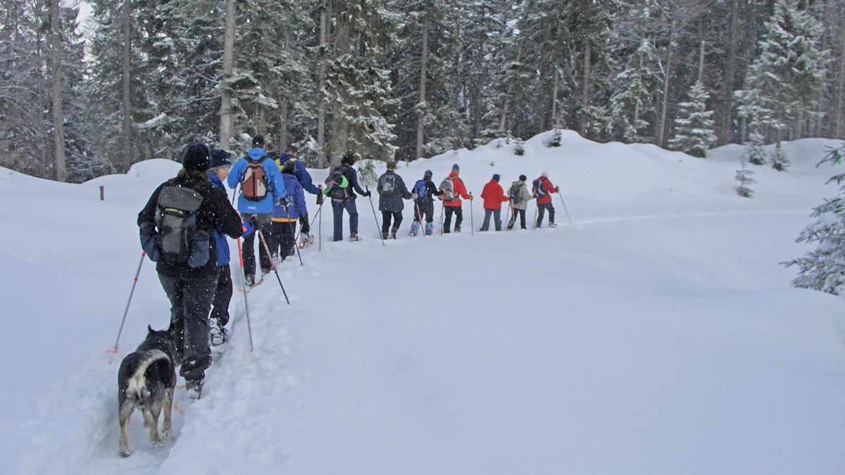 Schneeschuhtour in der größeren Gruppe