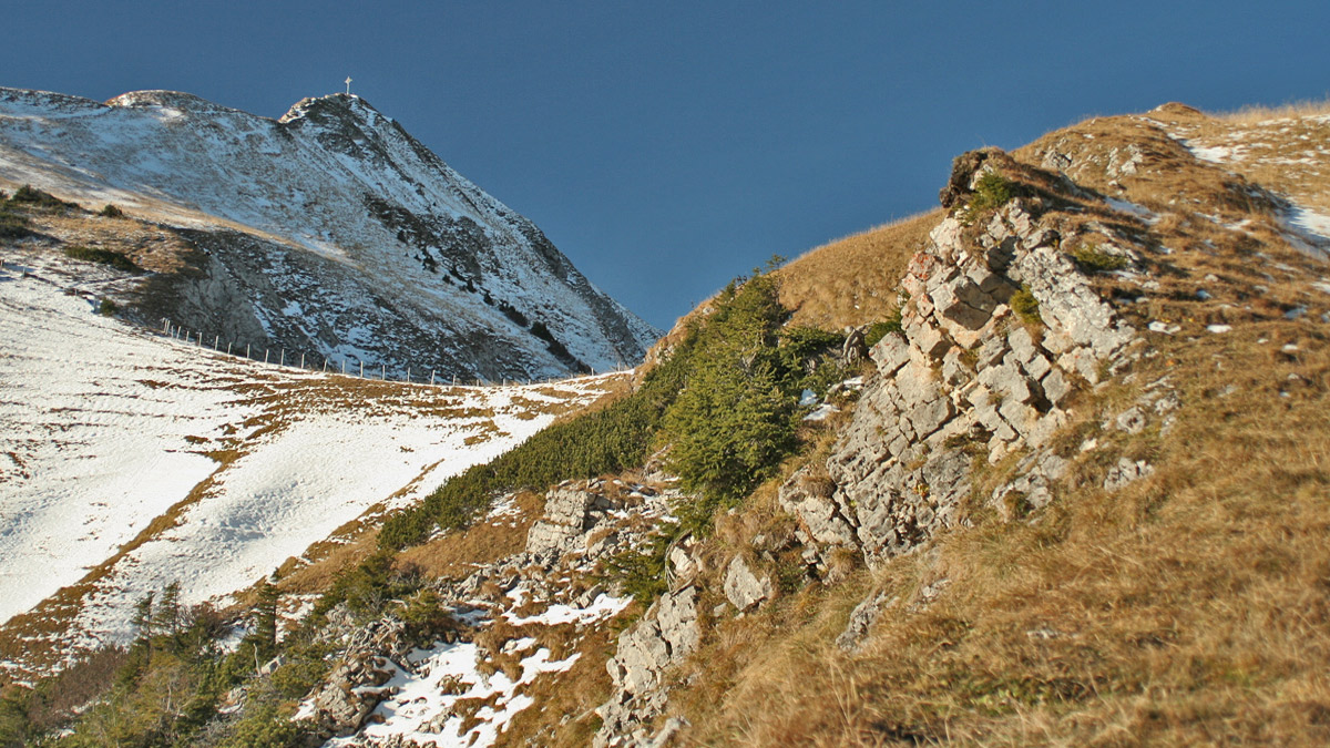 im Sommer bildet die Frauenweide an der nordöstlichen Grasflanke der Schneid den höchsten Weidebereich der Gehrenalpe