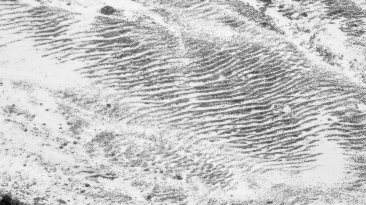 das Weidevieh zeichnet sich seine Isohypsen (Höhenlinien) selber ins Gelände