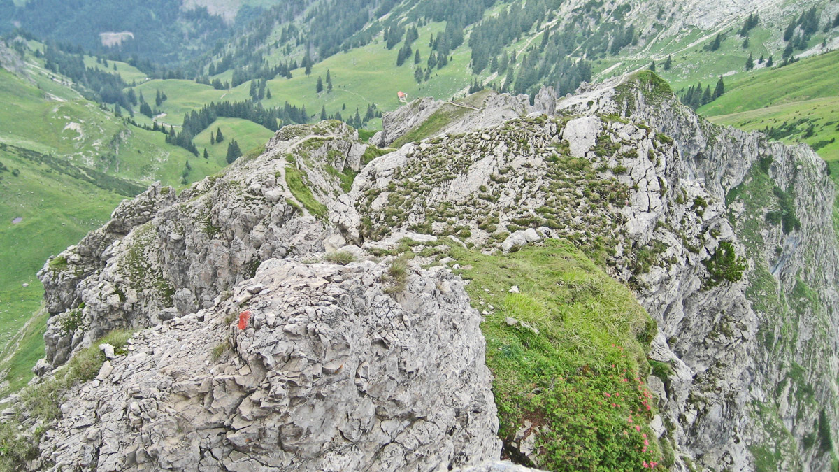 von der Schneid kommend wird das Gelände rauer - in ganz leichter Kletterei (I-) geht es hinauf zum Quergang unterhalb des Kleinen Daumens