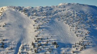 Spuren und Formen im Schnee