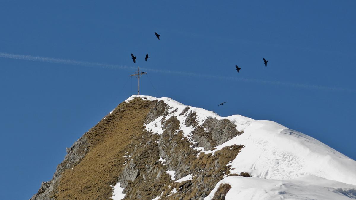 reger 'Flugverkehr' herrscht am Gipfel der Schneid