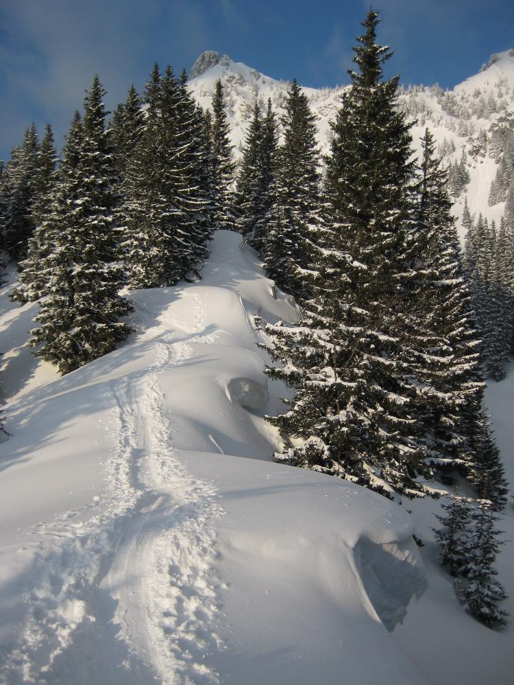über die Gessenwangalm erfolgt der Aufstieg im Gebiet des Gräner Älpeles in Richtung Füssener Jöchl - darüber die Läuferspitze