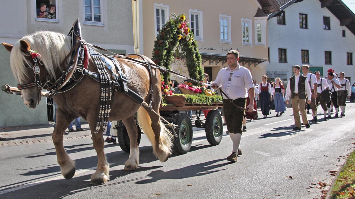 Pferdegespann der Reuttener beim Erntedankfest in Reutte