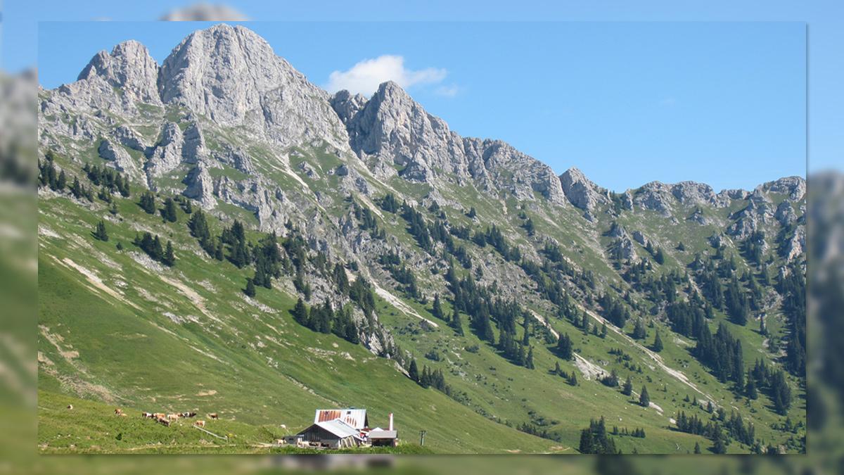 die Lechaschauer Alpe - dahinter ragt die Gehrenspitze in die Höhe