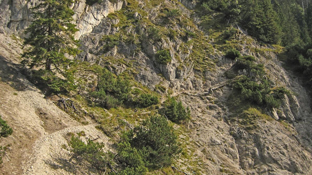 der Steig in Richtung Zwerchenbergalpe und Geierköpfe