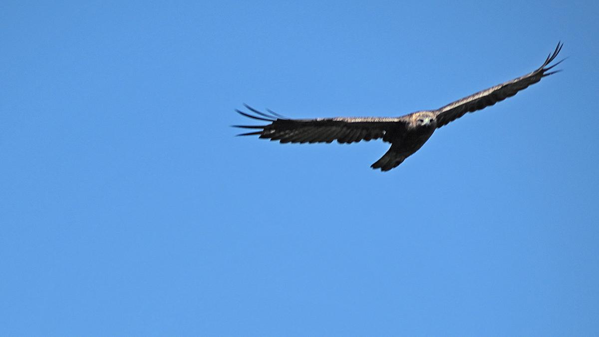 der Adler sieht vermutlich schärfer als ich... ;)