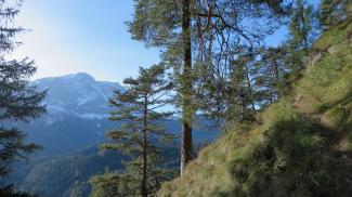 Griesbergalp-Steig