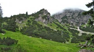 Schafe in der Schmalzgrube