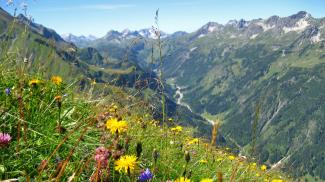 Blumenwiese über dem Rappenalpental
