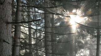 Nebel, Wald und Licht