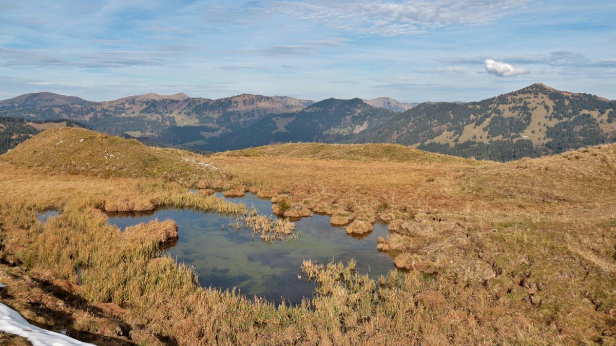 der kleine Moorsee am Gipfel des Piesenkopfs