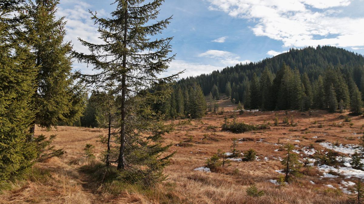 das Sattelmoor im Nordwesten des Piesenkopfs