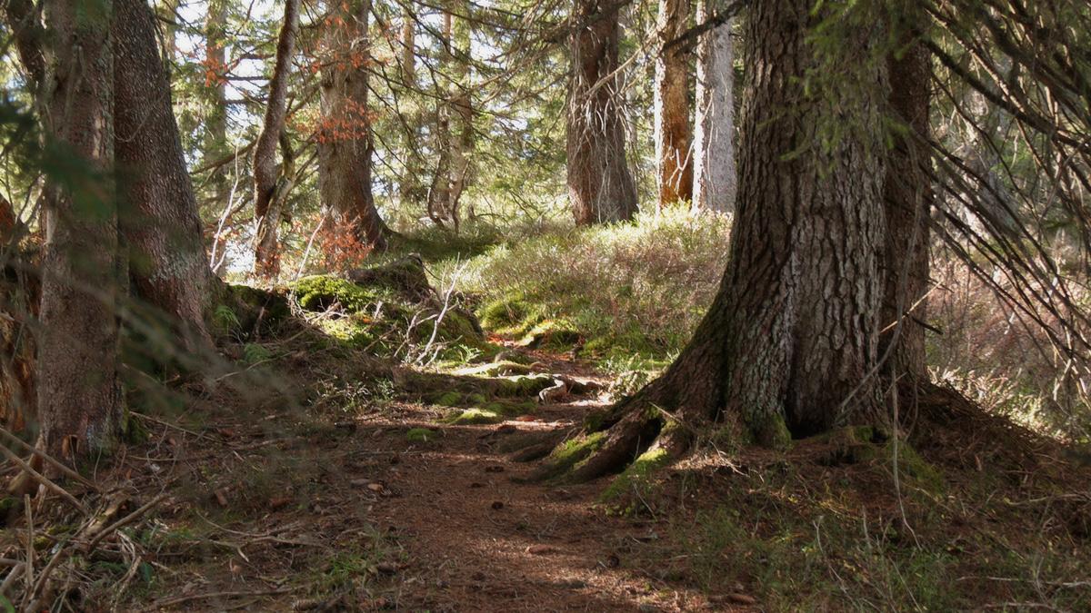 der bezaubernde Waldpfad am Ostgrat des Piesenkopfs