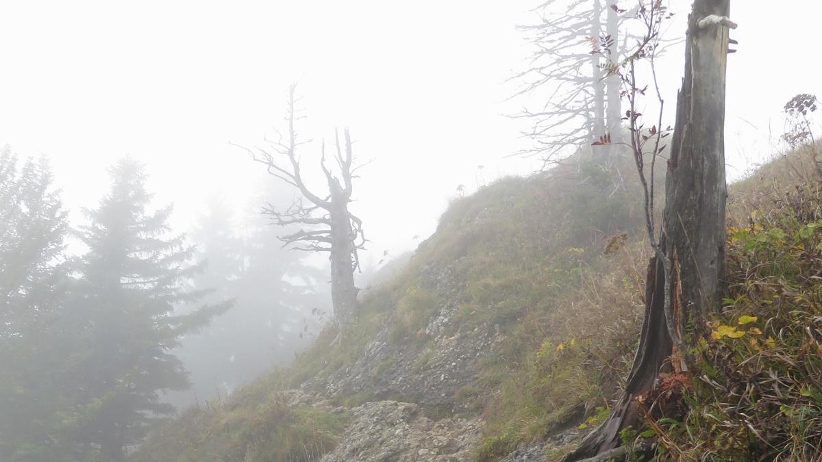 knapp unterhalb des Gipfels der Rohnehöhe (Eineguntkopf)