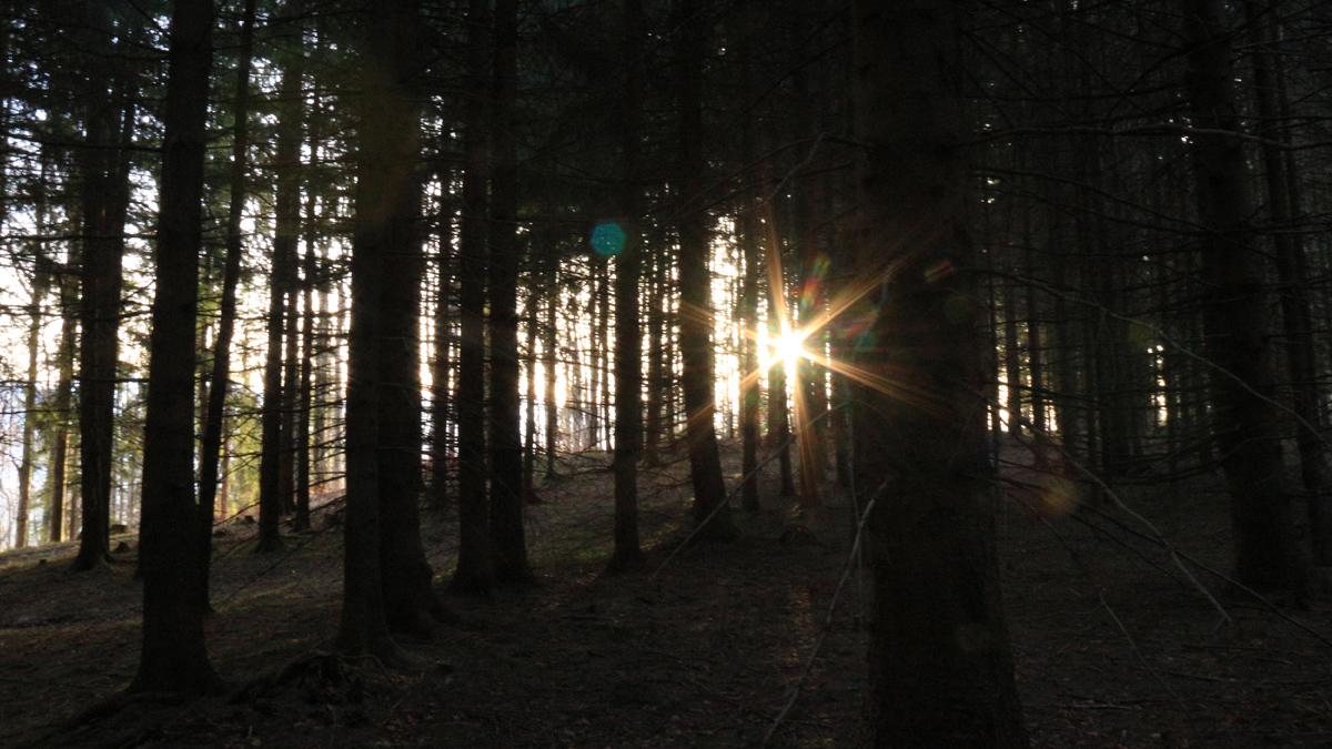 zwieselberg  wald  bäume