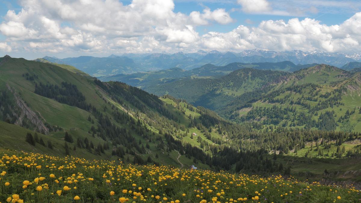 Gipfelblick vom Hochgrat hinab zum Gütle und der Unteren Gelchenwangalpe