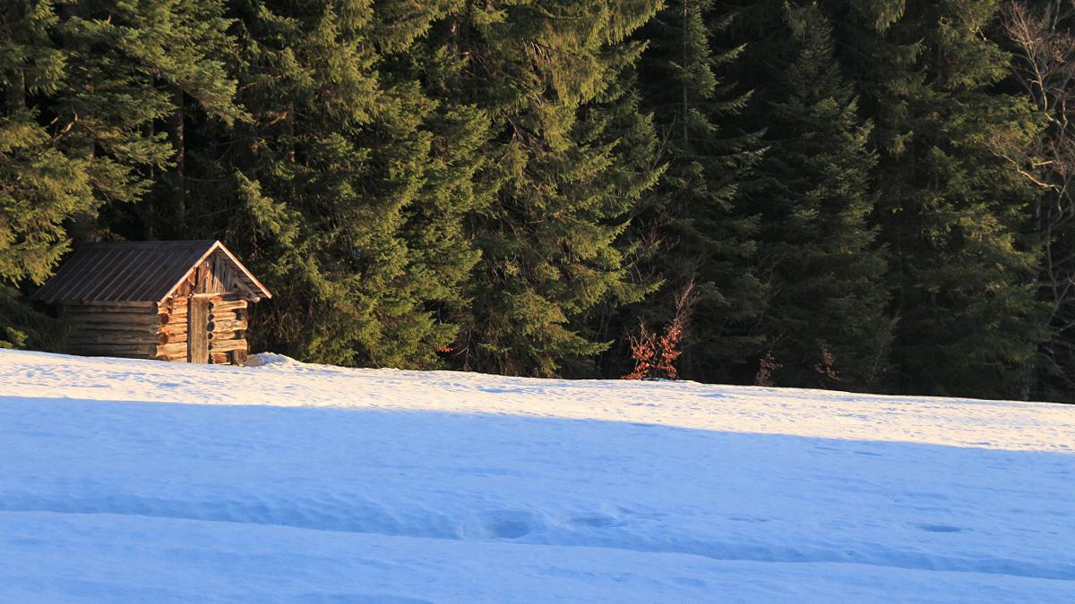 die Hütte im Wald - nahe Gschwend bei Bad Hindelang