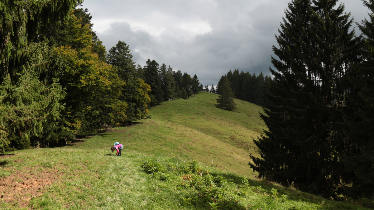 Kalzhofner Höhe