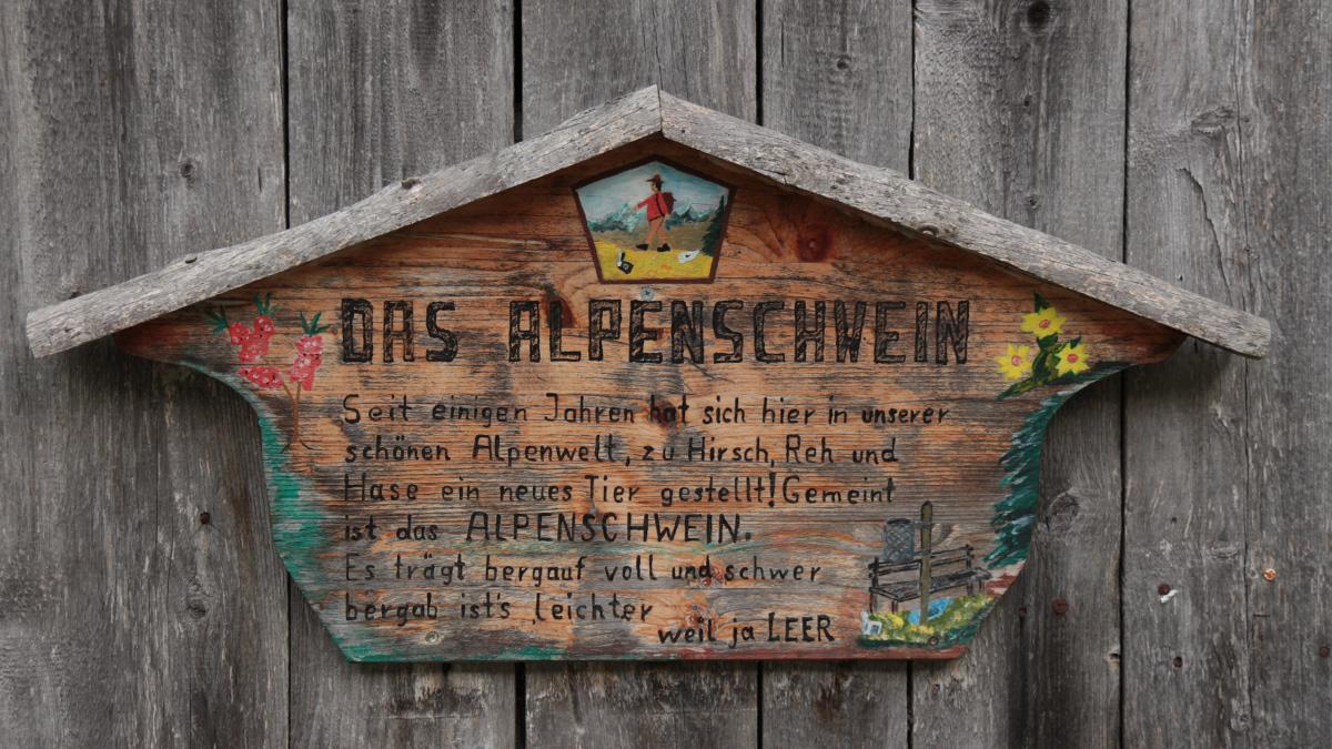 das Alpenschwein (Benglerwald)