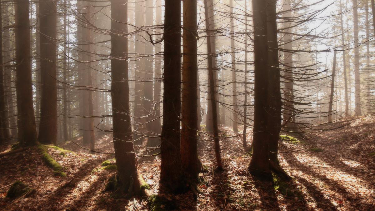 Nebel, Licht und Schatten ergeben eine wunderbare Stimmung - wie hier unterhalb des Schafkopfes oberhalb Farchant
