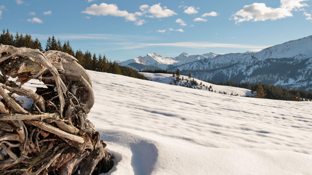 der Ausblick vom Wiesler Berg gegen Südosten hinüber zum Frickler Berg und den Bergen bei Tannheim