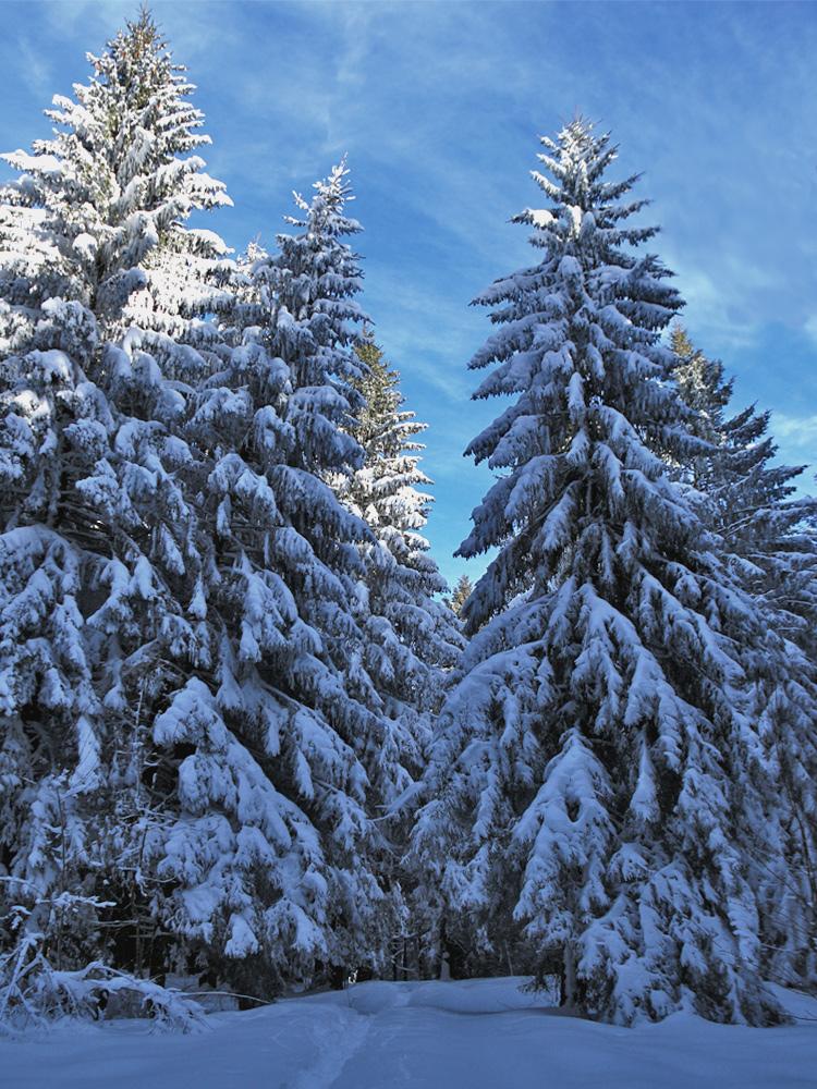 unterwegs im Wald bei Ettensberg