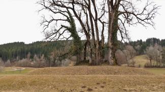 vermuteter Burgi bei Grünenbach