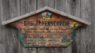 das Alpenschwein