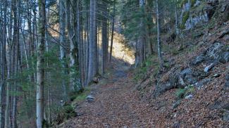 Kratzerweg