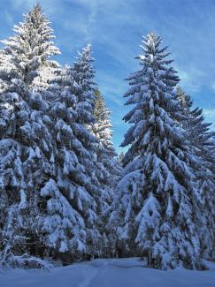 Wald bei Ettensberg