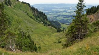 Guntenalpe