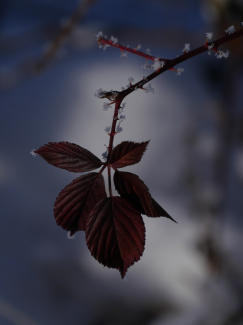 Winterlaub