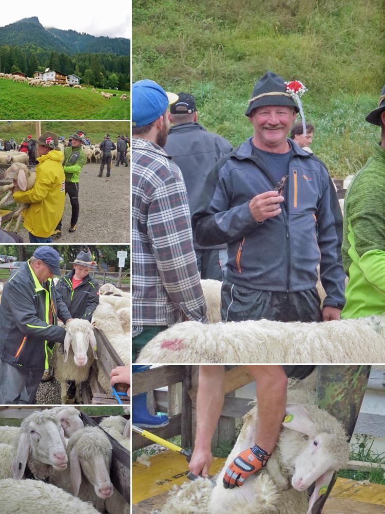 die Schafschied 2018 in Höfen